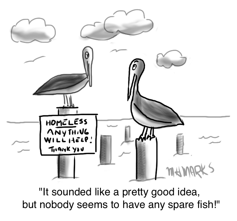 Homeless Pelicans