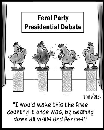Debating chickens