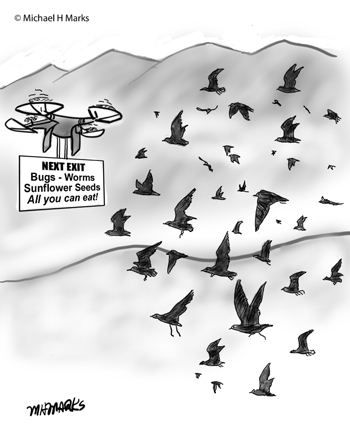 Drone for birds