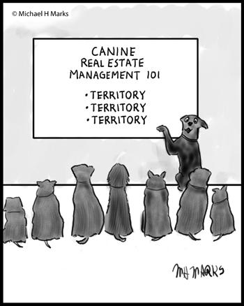 Canine territory