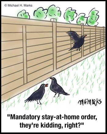 Mandatory stay at home order